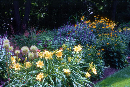 Daylilies In The Landscape
